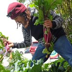 Luis Rodriguez  of #UrbanArtsCollaborative w/ https://t.co/5wPnFwe8JP lunch harvest, across from #Salinas City Hall https://t.co/BoRqGkERYC