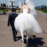 q lindo o homem se casou com uma centaura https://t.co/XWOFf1YUas