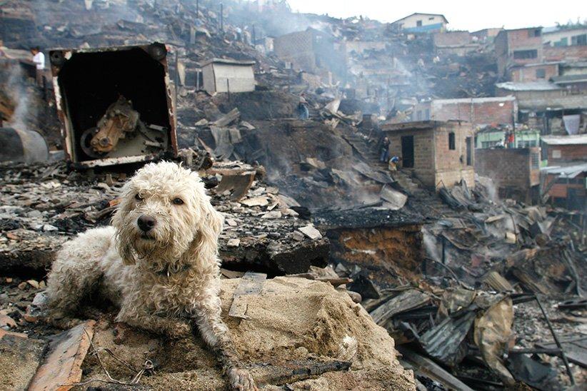 SOS #FortMcMurray #Alberta FIRE #pets @EdmontonHumane @AlbertaSPCA @llbrhs @DisasterAnimals https://t.co/fLwXz6bdSD https://t.co/iLvWgEolcA