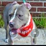 RESCUE NEEDED????2BKILLED 5/6 #NYC #DOGS 2B #RESCUE #PLEDGE https://t.co/FAndeir4kc @Gdad1 @jewelofark @loridowney3 ???????? https://t.co/YOvSG14VSu