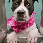 #NYC #ADOPT LADY ONLINE UNTIL 12PM TODAY! Pickup @NYCACC #NYC >https://t.co/K8KqkV6cTI https://t.co/k0VWBgsA7I https://t.co/q4JmFHlf2U