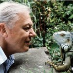 Sir David Attenborough at 90 interview: Retire? Ill never tire of the natural world' https://t.co/02f1AQjJ7x https://t.co/B9JvAxfWoL