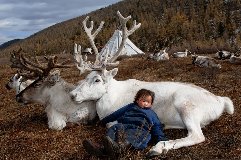 Living With Reindeer, Mongolia   Photography by ©Hamid Sardar-Afkhami https://t.co/YVkfjyM9Iy