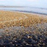 Conoce el documento que autorizó vertimiento de 9mil toneladas de salmón descompuesto https://t.co/es54PwpKYt https://t.co/PONZkIIFWe