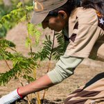 @Gurmeetramrahim #MSGmissionHumanity @derasachasauda Flowers planting trees to save environment https://t.co/x5QaQ2t8DT