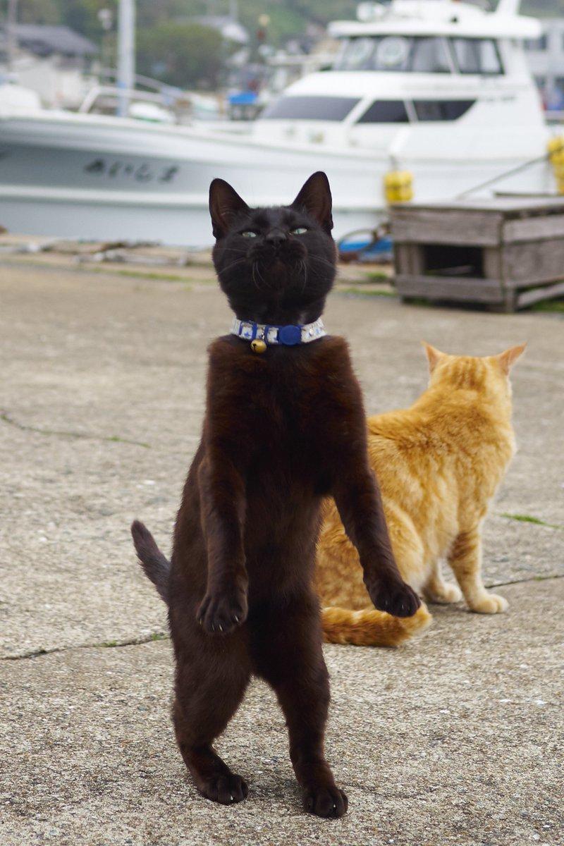 黒猫の撮影は難しいとよく言われるので、「じゃあ動きつけてかっこよく撮ったろうじゃん」と思ったけど  …
