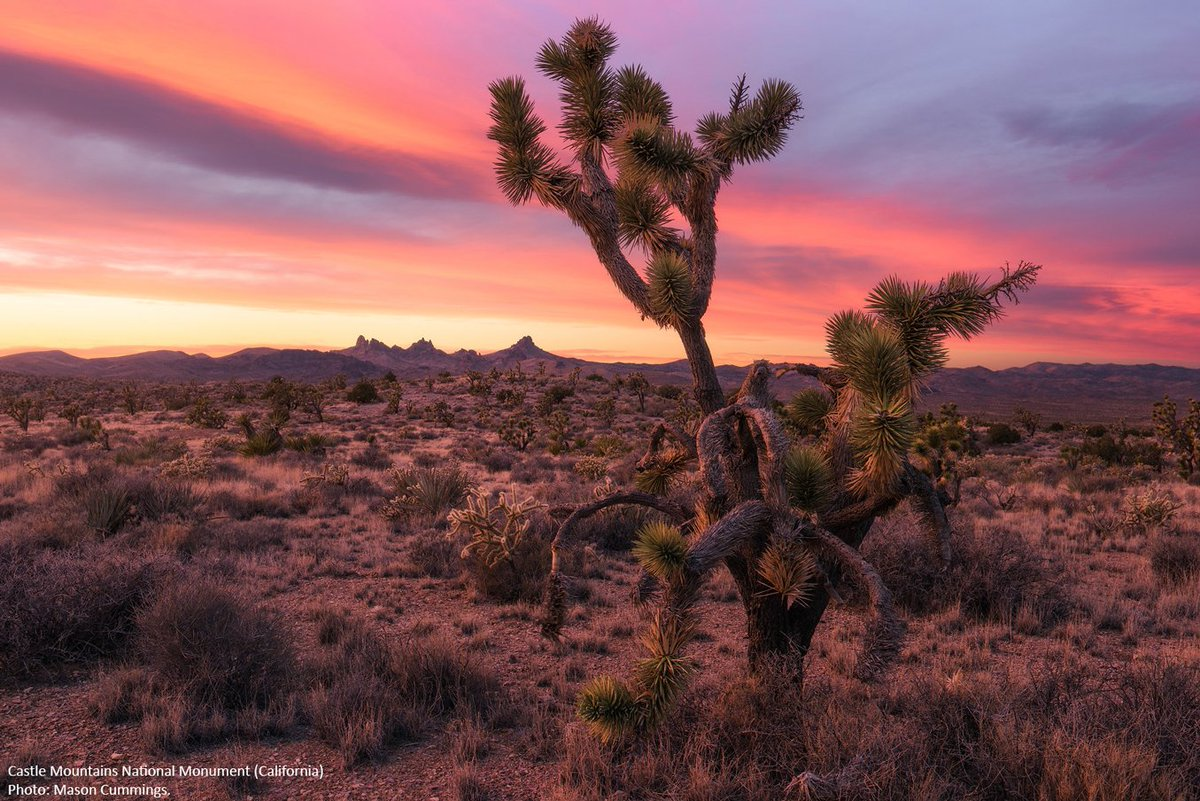 RT @Wilderness: A cause for celebration! California desert national monuments now official https://t.co/xMwlVlPvHt #MonumentsforAll https:/…