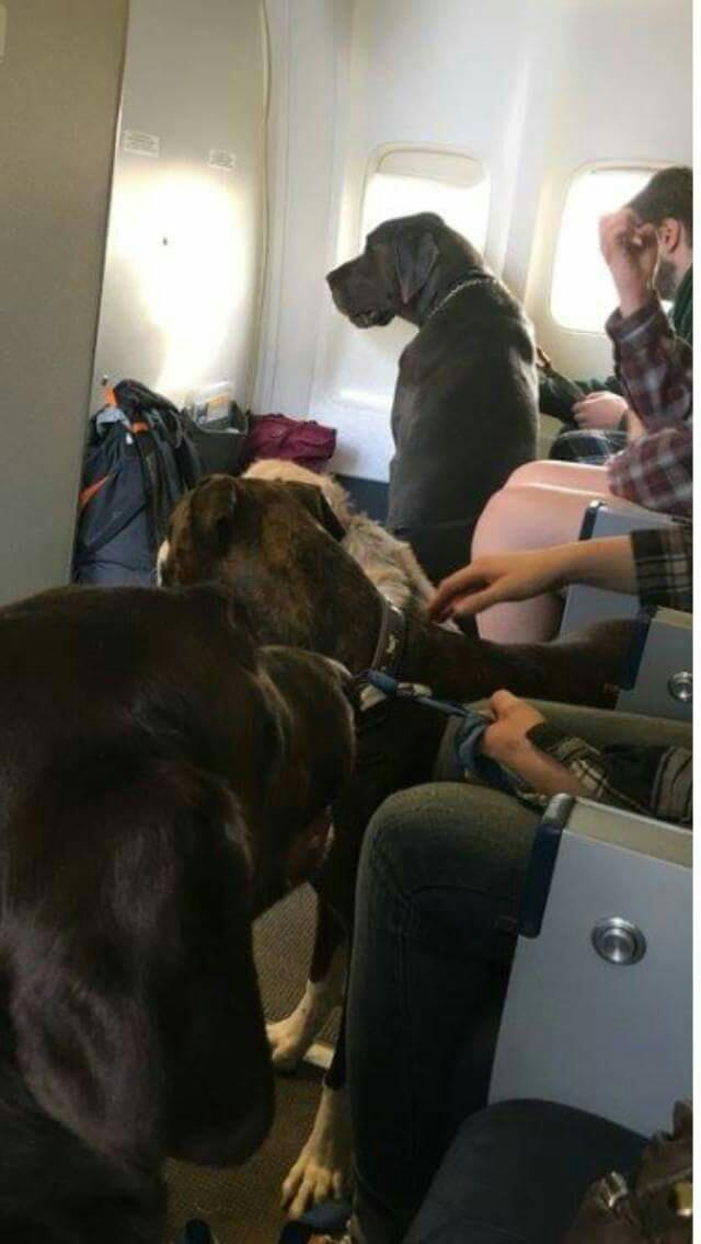 Canadian North Airlines flying fire evacuees & their pets to safety for free- heartwarming!  Stay safe Canadians! https://t.co/OVpjyQTxtX