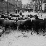 Croiser un troupeau de moutons dans les rues de #Nantes, ça vous parait improbable ? En 1900 cétait banal ! https://t.co/IDXV6Gc7Vy