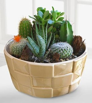 Your Friday won't succ if you have a cute plant! RT for a chance to win https://t.co/eJy7yx1NVD https://t.co/fV4HTAQxqF