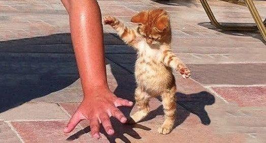The 100 greatest cat photos ofall time - https://t.co/4AlTfRdFF2 https://t.co/6ekBgbkEaU