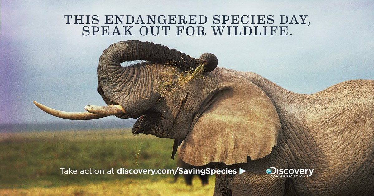 An elephant is killed every 15 min. for its tusks. Help protect them: https://t.co/bpmDuhMujk. #EndangeredSpeciesDay https://t.co/0dPUNMEiXY