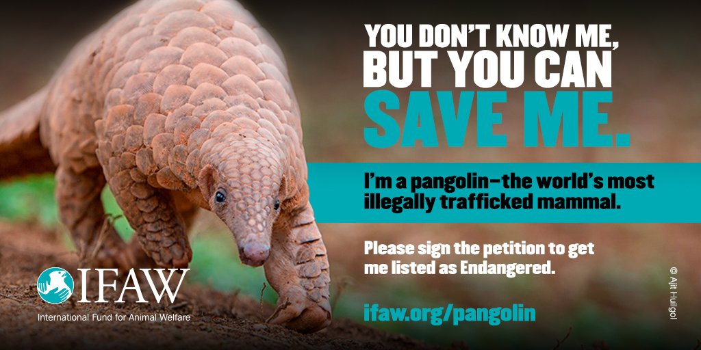 RT @LeoDiCaprio: Pangolins=most trafficked mammal in the world as they're poached for their meat & scales: https://t.co/Mn4tDXLRX9 https://…