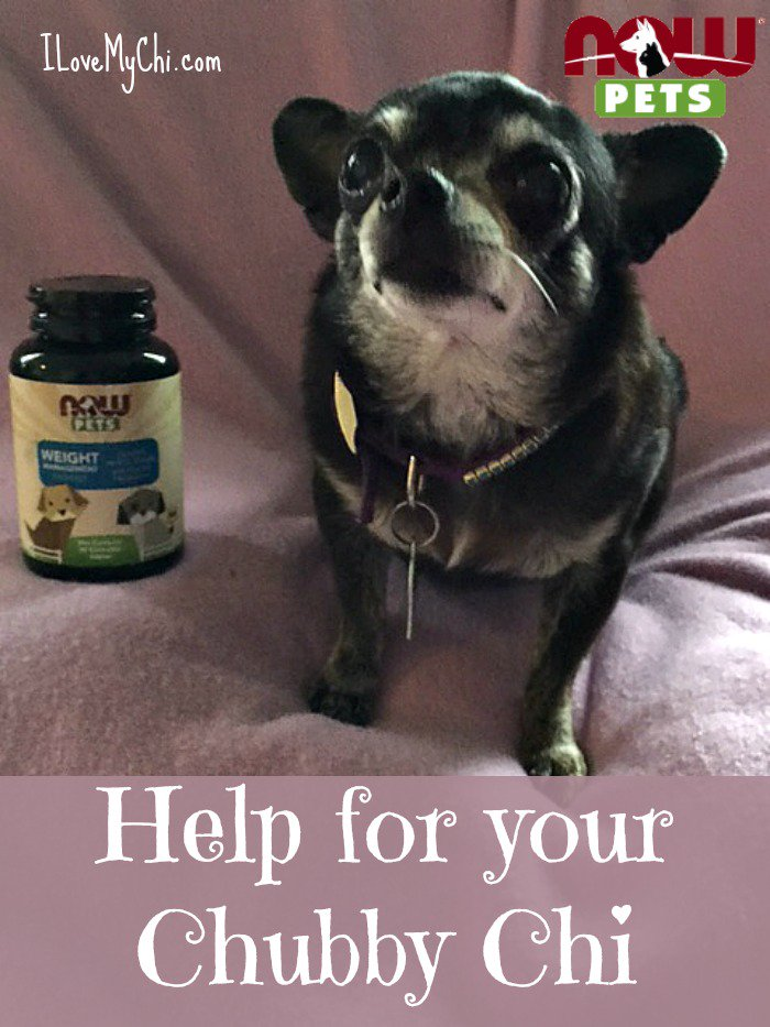 Get wt loss tips for ur dog & u can win $350 pet supplements #NOWpetsSweeps #ad @NOWfoods https://t.co/2DaX42Q7lK https://t.co/gXcEyixFB6
