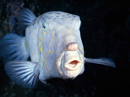 This fish looks like Donald Trump https://t.co/QfoPD0UdEh