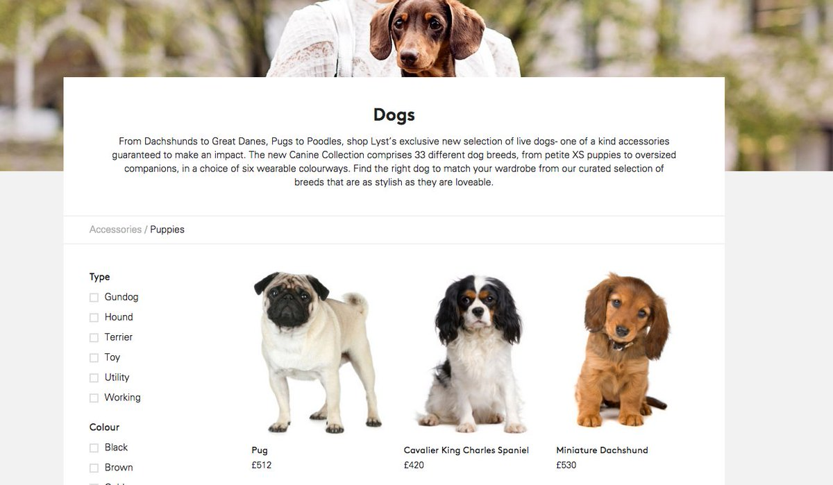Introducing the Canine Collection! Be sure to compliment your summer outfit with a four legged friend