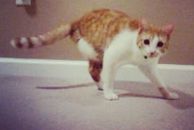 This cat has 3 legs.  He's way better than you. https://t.co/PpqvT484sq