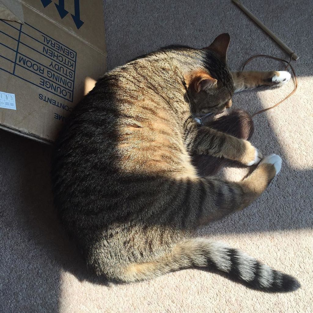 Sunshine and boxes and furry-blob-on-a-string... these are a few of her favourite things