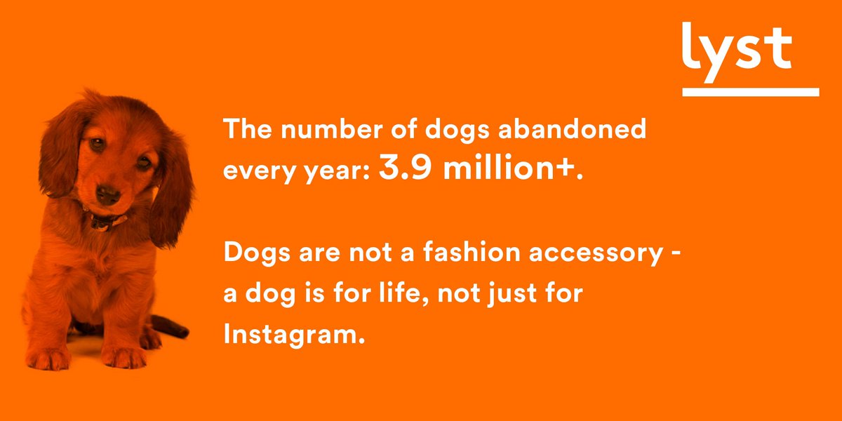 The number of dogs abandoned each year: 3.9 million+. The truth behind the #CanineCollection https://t.co/JtQhT2BMcy https://t.co/Hrmdk5Kibu