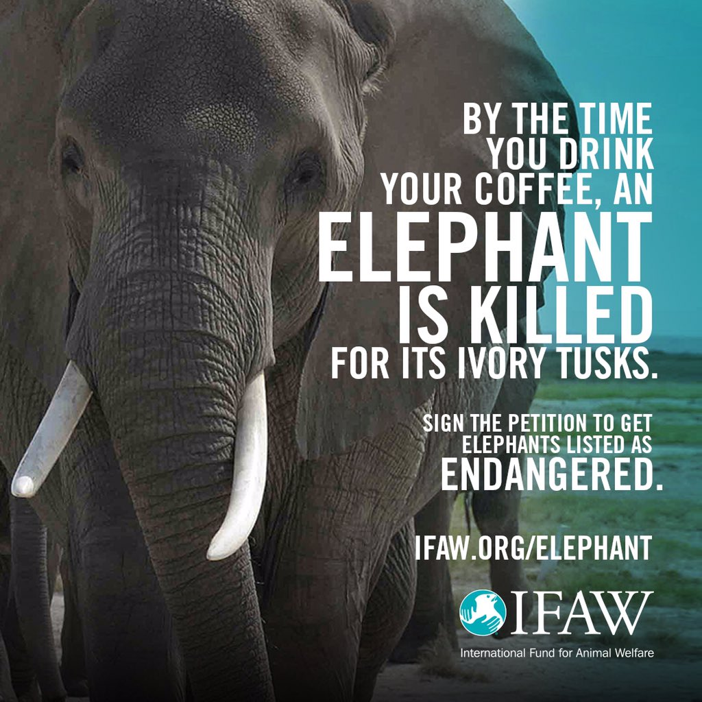 An elephant is killed every 15 minutes - YOU can help via @action4ifaw's easy petition! https://t.co/dKXaYCNDzi https://t.co/Op4Upu4MMc