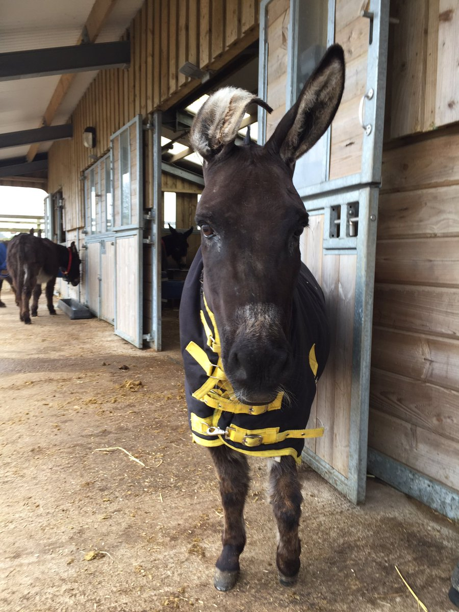 Wonky the donkey was born with a bent ear, but we absolutely love him. Make sure you always love yourself x https://t.co/xgTu2I5Jr0