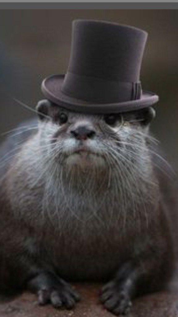 #RemoveALetterSpoilABook Harry Otter https://t.co/X7XFnvy8SN