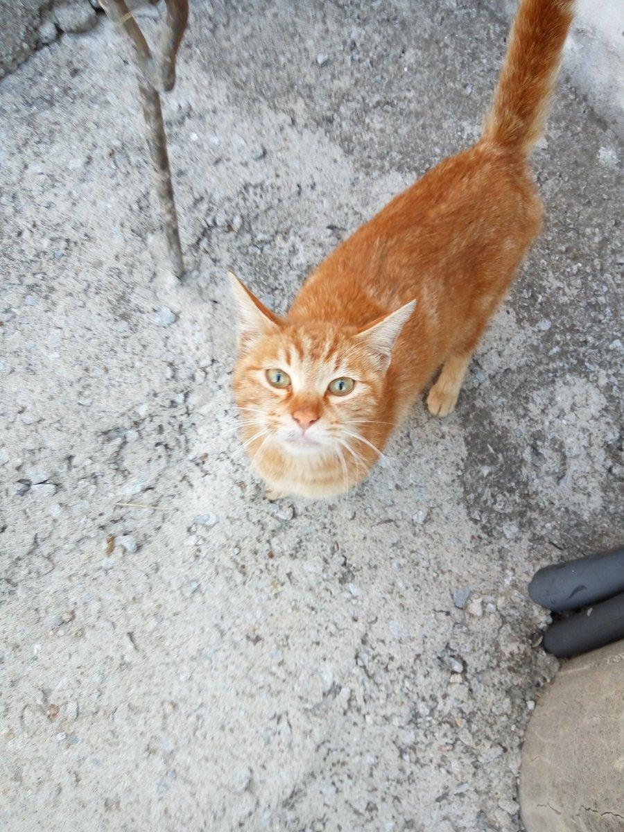 아침부터 고양이 모자에게 출근을 저지당했습니다. 크윽.. https://t.co/4qwWsGen2j