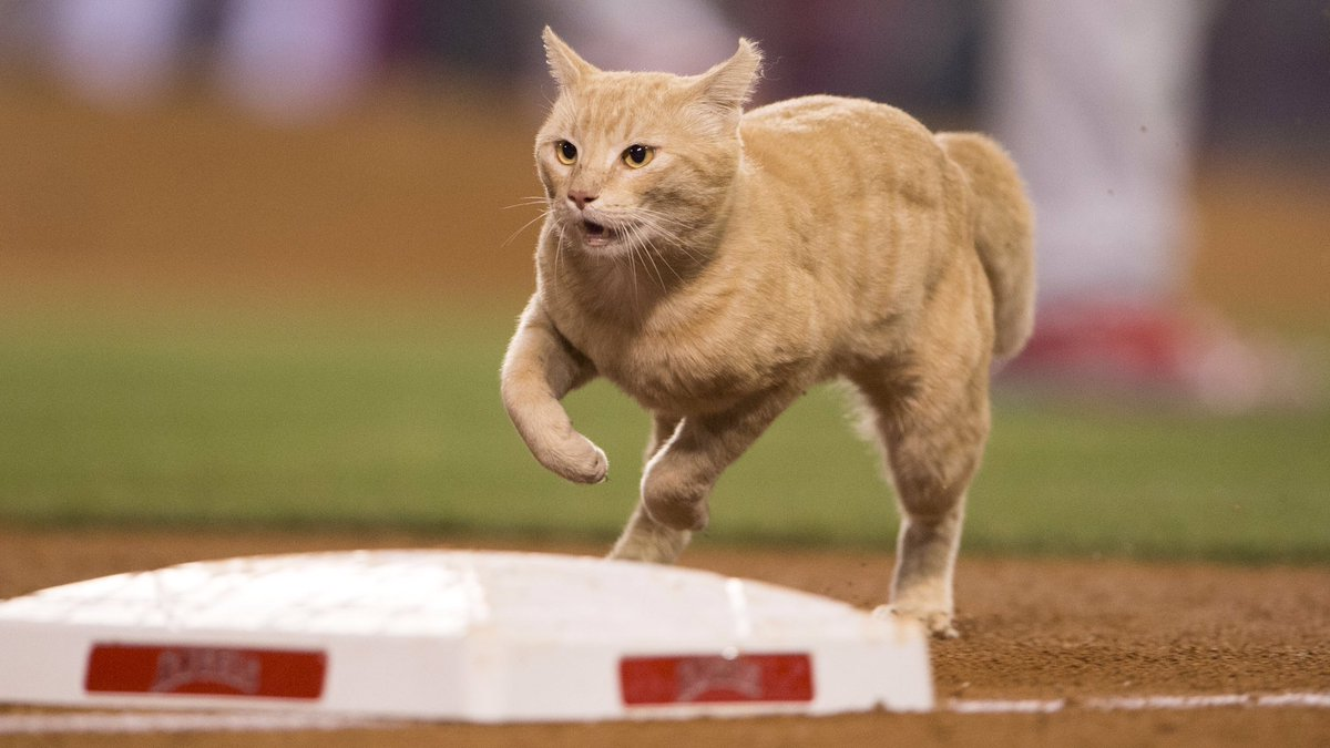 We Need A Rally Right Meow Rallycat Https T Co