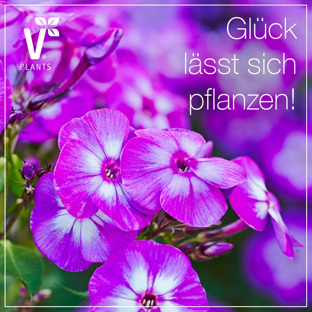 Happy Weekend! :-) #FF @BerufGaertner @GGaertnern @meingarten @BaumschuleAmmer @loesslin @jap https://t.co/riNiHvthBx