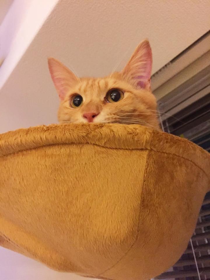 ネコを飼い始めてから、もうすぐ3週間。 こんなにカワイイ生き物が自宅にいると思うと、目に映るすべての風景が輝いて見える・・・。マジで。 https://t.co/9EGBRbKXPV