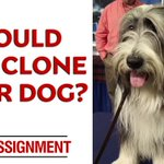 Dog lovers: Would you spend $100,000 to clone your beloved pet? #OnAssignment Sun 7/6c https://t.co/bfAKPu2ltm https://t.co/k9zM9r3tXd