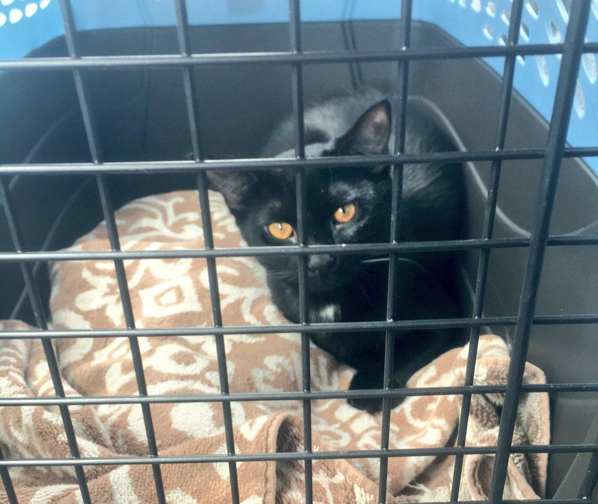 Meet Mutie! Cat lady level 2 unlocked!