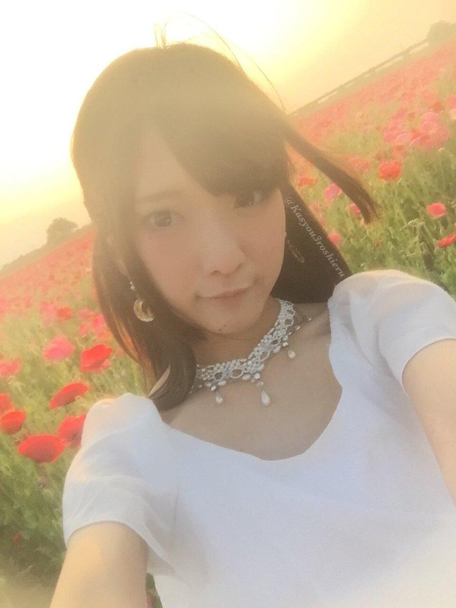 火将ロシエルさんの写真とつぶやき:夕日とお花畑! https://t.co/wafkCtlwzk
