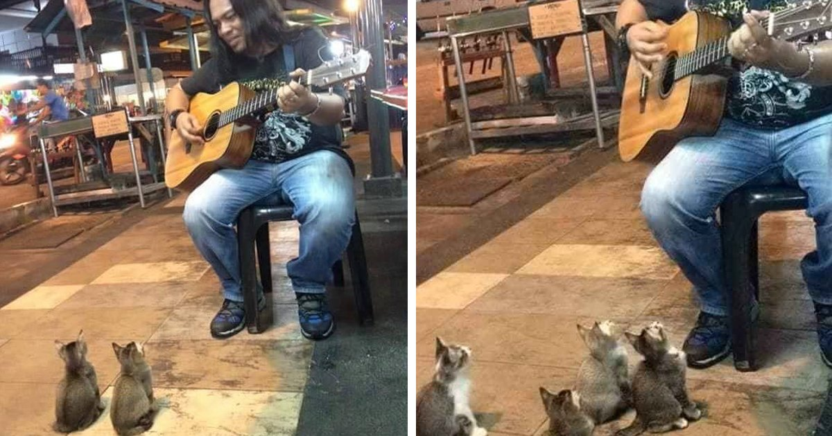 4 Music-Loving Kitties Come To Listen To Street Singer Everyone Else Ignored: https://t.co/sbLXmiTxED