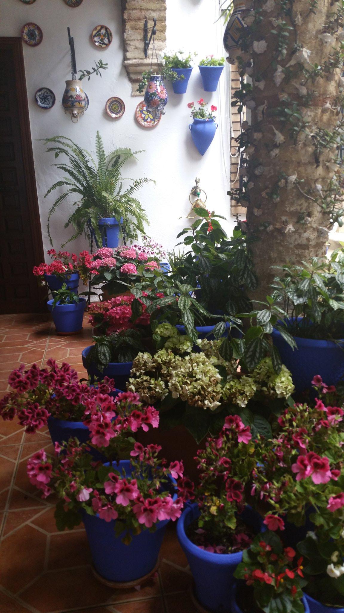 Enjoying the featival of patios in #Cordoba https://t.co/Od1BuUT3oe
