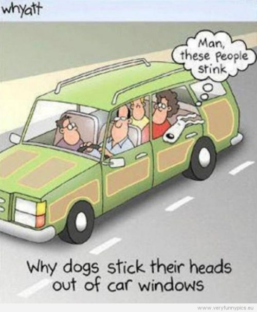 Why dogs stick their heads out of car windows: https://t.co/ww9DZp6Sub