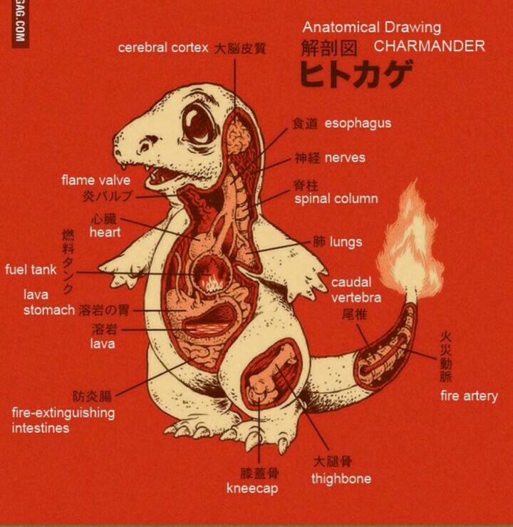 Hoy toca estudiar para el examen de anatomía...;) - scoopnest.com