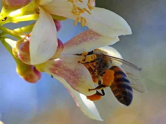 How to Encourage Beneficial Insects in Your Garden via @MyGardenSchool #gardening courses https://t.co/TnMLJAo8qF https://t.co/t365NAUBI3