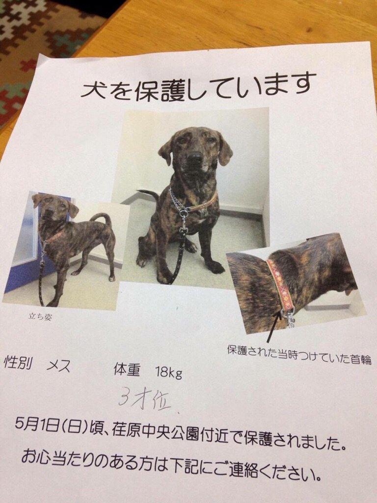 【迷い犬を保護しています】知り合いの知り合いが5/1から荏原中央公園付近にいた迷い犬を保護しているそうです。お心当たりのある方は荏原警察署03-3781-0110まで一報お願いします! https://t.co/QsMzJ4RN15