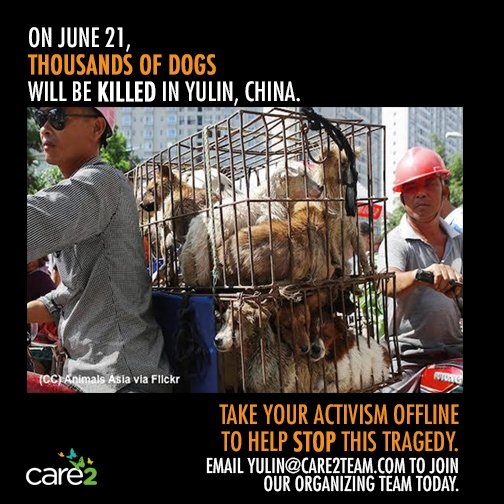 Want to help stop puppy slaughter? Email us: yulin@care2team.com #StopYulin2016 #StopYulin https://t.co/NWfeQyTBbZ