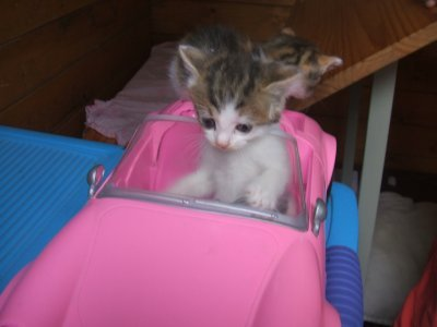 My new car !@babygry @mill_cats @mikantoanimals @kjang325 @emily_dotor123 @mmjoymm_StP @art_paragon @2015caf https://t.co/VcKGkx7Q0X