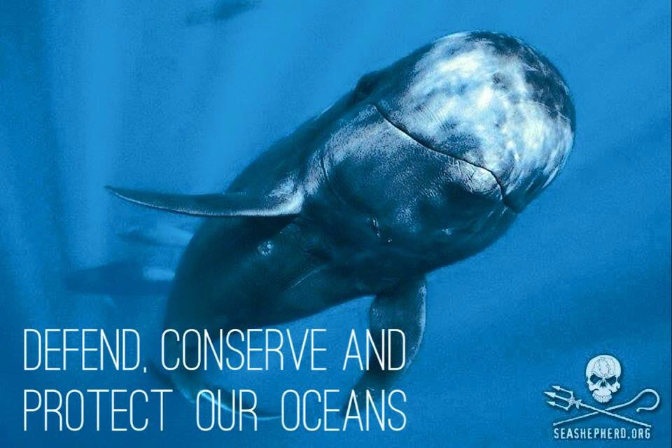 RT @SeaShepherdSSCS: Will you join us? https://t.co/fnJLq69DUq https://t.co/y4u2lBlAQL