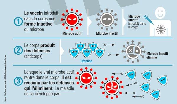 [#Infographie] La vaccination, concrètement comment ça marche ? #vaccin #santé https://t.co/7IPklHsMKi