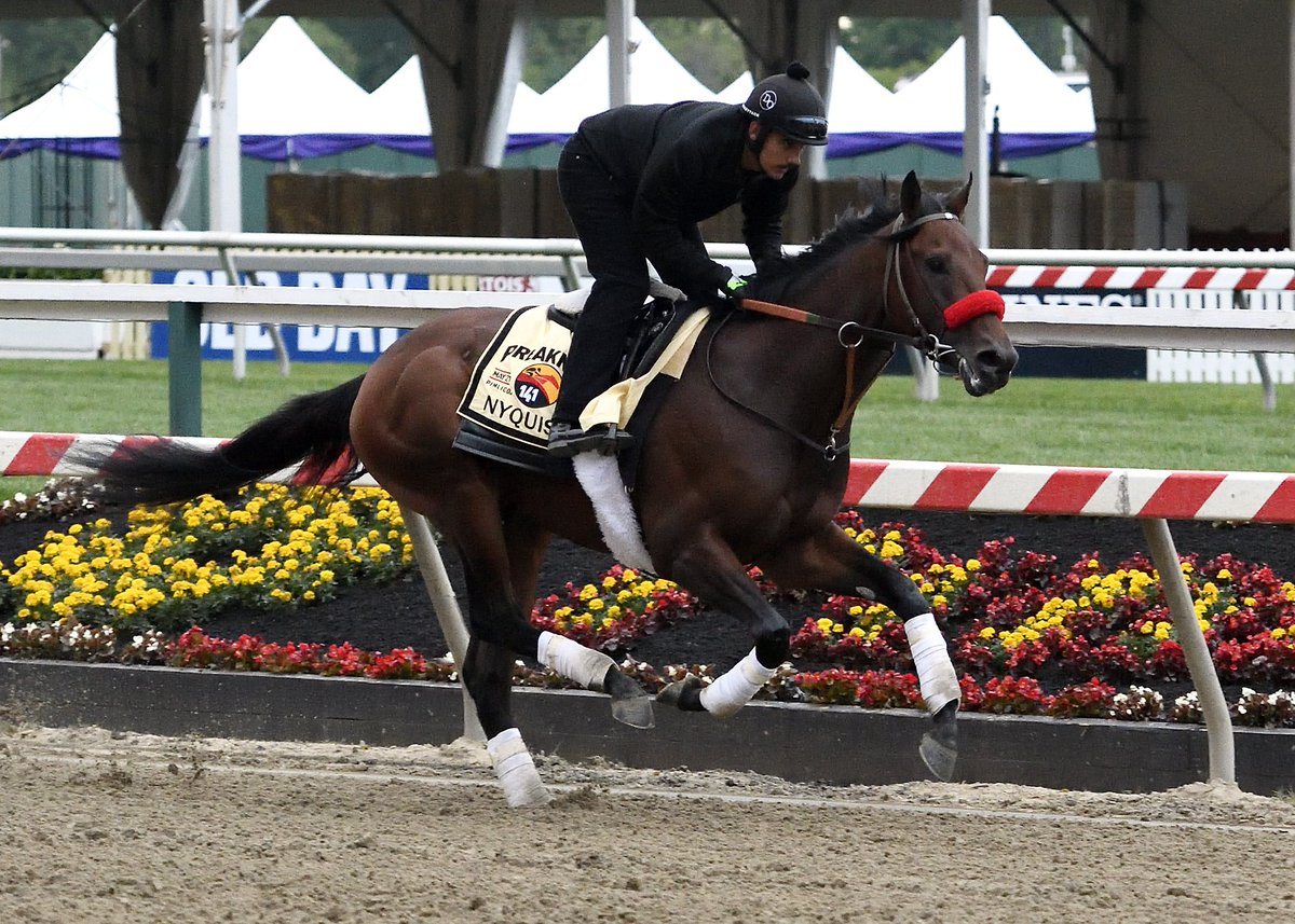 Champ Nyquist today @ PIM. Photo: Maryland Jockey Club. https://t.co/hF9jQlJiRT