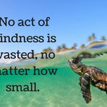 """""""No act of kindness if wasted, no matter how small. #Tortuga #Honu #KindnessAlways #MondayMotivation #Inspiration ☆ https://t.co/EVot2gKM0c"""