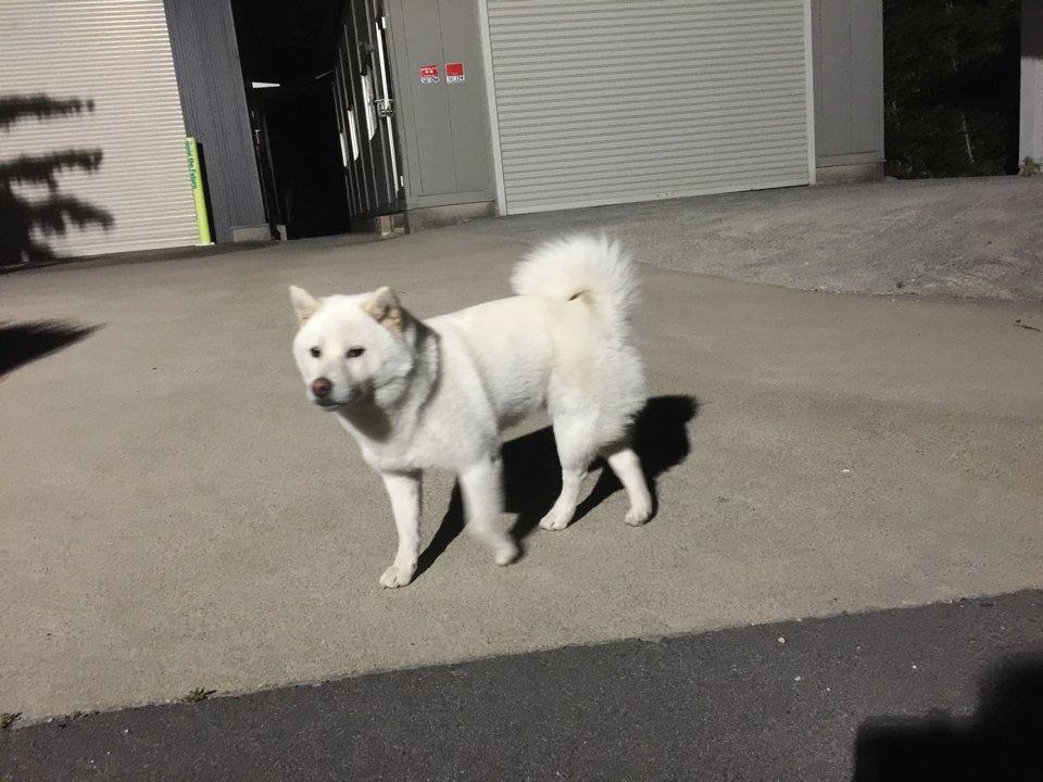 #三重県 #迷い犬 #員弁郡 #四日市 #拡散希望 【拡散希望】 中上付近で見掛けました。保護しようとしたのですが逃げられてしまいました。毛並みの良い子でした。飼い主様が見つかりますように。 https://t.co/4IdwcBtnRX