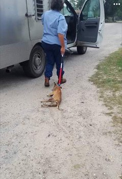 #TX #Alice pound was called to aid injured #dog-Instead-worker dragged dog by pole to truck  https://t.co/otKNQ5dXbJ https://t.co/tIt4P4LTzX