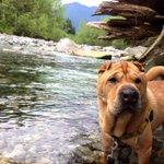 City of #Vancouver earmarks $10,600 for animal welfare grants https://t.co/1pvwwF7m2G #vanpoli #animalrescue https://t.co/KXMf0rt4TB