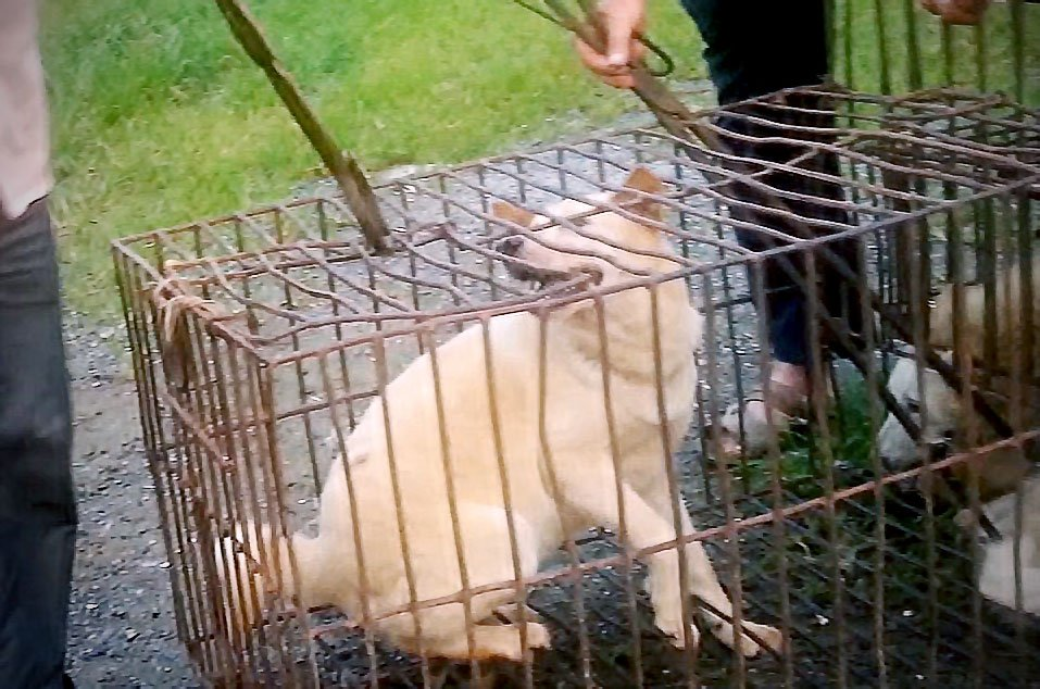 BLOG: US House Resolution Condemns Yulin Dog Meat Fest, Calls to End China's Dog Meat Trade https://t.co/ZQ7DqsFE3H https://t.co/chHZSHiNQ2