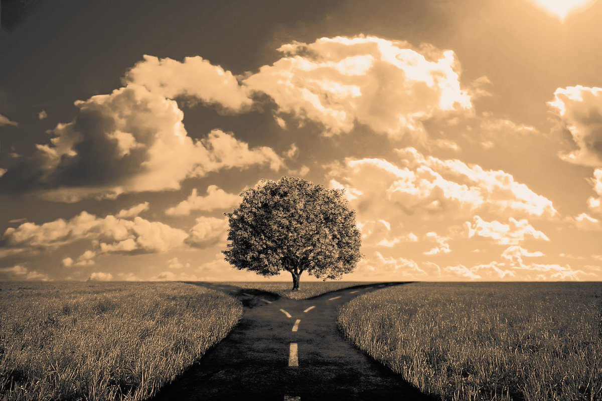 RT @ViciousVixxenV: A gorgeous photo by @hitRECord artist BunchOfGrapes. Two Paths .... https://t.co/nrHnltV5kV https://t.co/6brJyk4jo8
